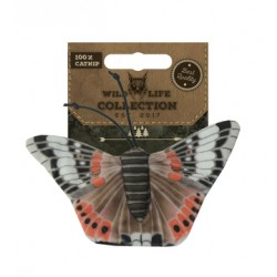 Wild Life Cat Red Admiral Butterfly