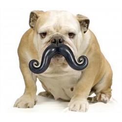 RECORD Zabawka dla psa - wąsy