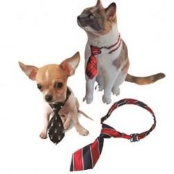 CROCI Krawat 10x5cm