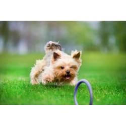 PULLER Zabawka dla psa Micro