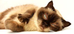 Wybredny kot