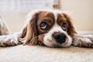Karma dla wybrednego psa