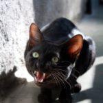 Problemy behawioralne kotów