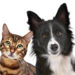 Najlepsze karmy dla psów i kotów