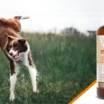 Canifelox Mobility Preparat dla psów na stawy