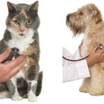 kardiomiopatia psow karmy bez zbóż •zoologiczny