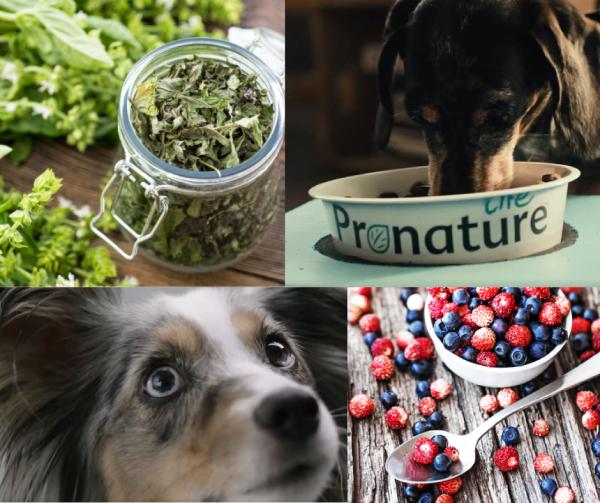 Wysokomięsna karma dla psów aktywnych i pracującychPronature Life Dog Moove Active+