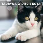 TAURYNA W DIECIE KOTA