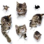 1stChoice mokra karma dla kota